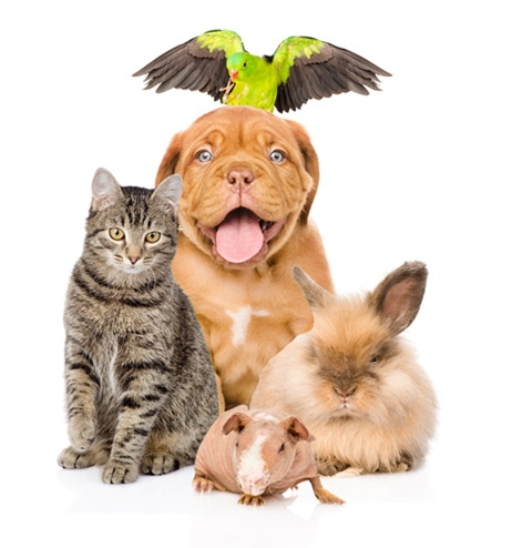 animal care and eco friendly cleaning products
